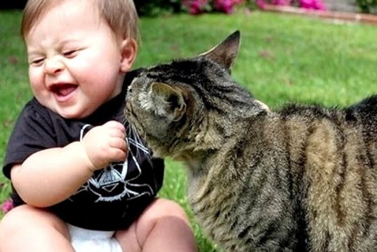 Funny cats and babies playing together
